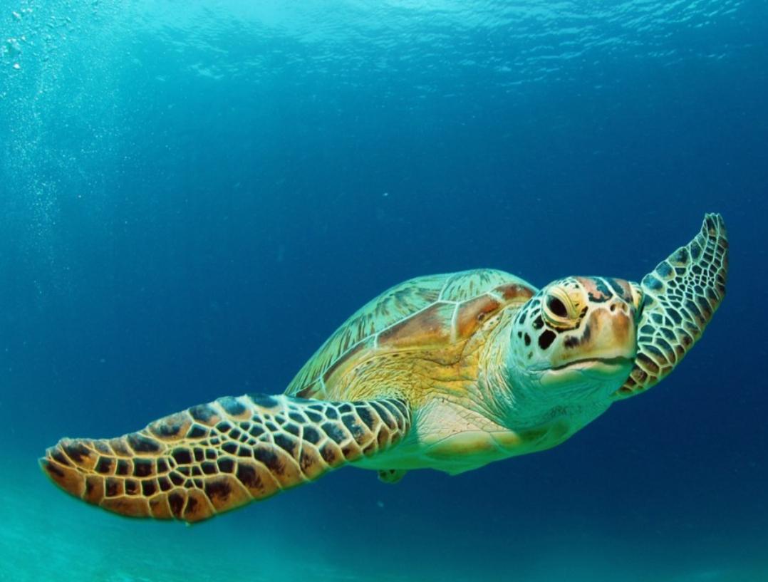 請勿觸碰海龜